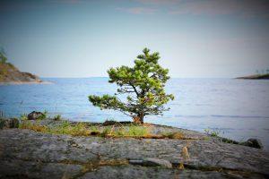 №4. Автор: Sega; Название: Жизнь; Место съёмки: архипелаг Палосаарет.